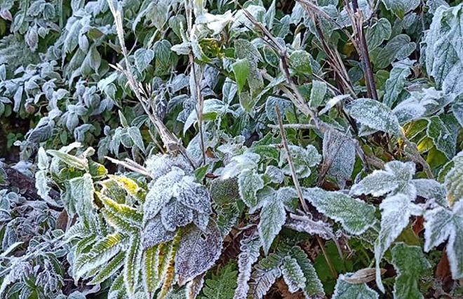 Sương muối xuất hiện dày đặc ở các đỉnh cao của huyện Trạm Tấu. (Ảnh: Thanh Miền)