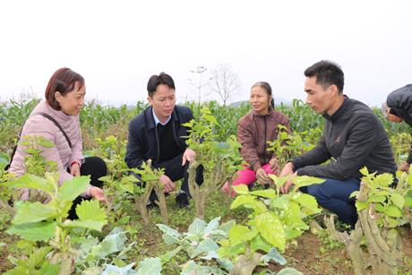 Phát triển nghề trồng dâu nuôi tằm đang là một trong những chương trình kinh tế trọng điểm của huyện Trấn Yên, đem lại lợi ích thiết thực cho người dân.