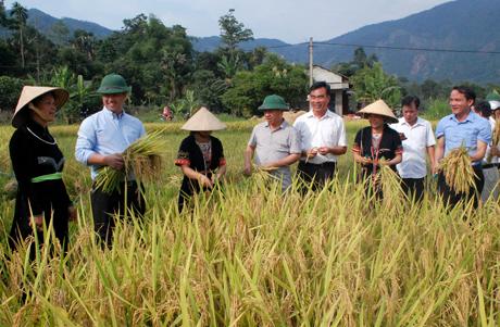 Các đồng chí lãnh đạo huyện Yên Bình kiểm tra năng suất lúa vụ đông xuân tại xã Bạch Hà.