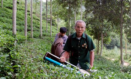 Cựu TNXP Trần Văn Quyển, xã Cát Thịnh, huyện Văn Chấn là tấm gương tiêu biểu trong phát triển kinh tế của Hội Cựu TNXP tỉnh Yên Bái.