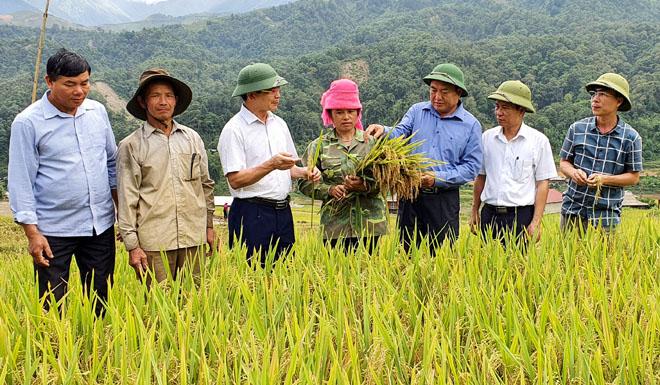 Năm 2020, tổng diện tích gieo trồng cây lương thực có hạt của huyện Trạm Tấu ước đạt 6.980 ha, tăng 440 ha so với năm 2015