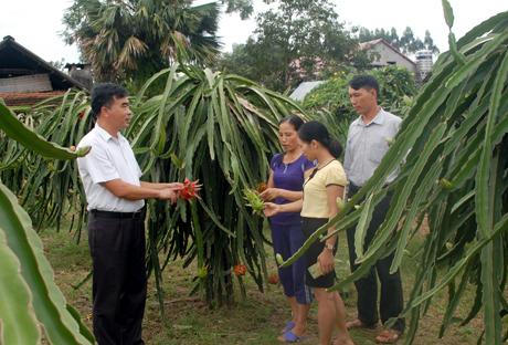 Hiệu quả kinh tế từ cây ăn quả mang lại cho người dân Bạch Hà thể hiện rõ nét khi bộ mặt nông thôn dần thay đổi, thu nhập người dân tăng theo từng năm.