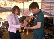 Anh Hoàng Hữu Cừ trao đổi kinh nghiệm chăn nuôi gà với cán bộ Trung tâm Dịch vụ hỗ trợ phát triển nông nghiệp huyện Trấn Yên.