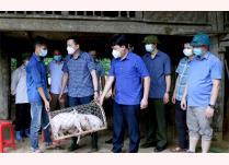 Bí thư Huyện ủy Yên Bình An Hoàng Linh trao hỗ trợ lợn giống cho gia đình anh Hoàng Văn Hợi, thôn Ngòi Sọng, xã Xuân Long.