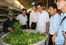 Mô hình trồng dâu nuôi tằm ở xã Tân Đồng, huyện Trấn Yên giúp hội viên nông dân nâng cao thu nhập, ổn định cuộc sống.