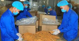 Workers at Vietnam Cinnamon Cooperative in Dao Thinh commune, Tran Yen district.