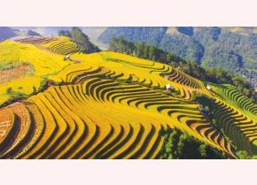 Waves of Mu Cang Chai terraced fields