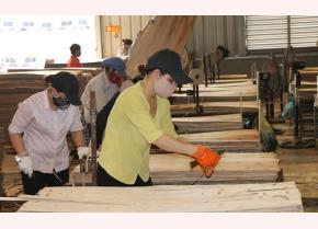 Công nhân Công ty TNHH ngành gỗ Thiên An Việt Nam tại Yên Bái thực hiện công đoạn vá ván.