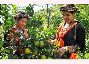 Trồng cây ăn quả có múi giúp nâng cao thu nhập cho người dân xã Tân Phượng.