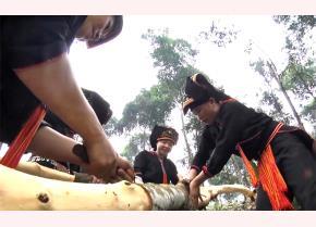 Nghề trồng quế mang lại hiệu quả kinh tế cao ở vùng đồng bào dân tộc thiểu số huyện Văn Yên.