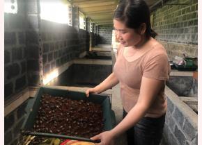 Nuôi dế mang lại hiệu quả kinh tế cho các gia đình nông dân ở xã Đồng Khê.