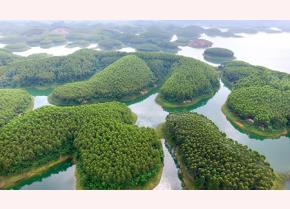 Large-timber forest area in Thinh Hung commune, Yen Binh district.