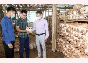 Lãnh đạo Hội Nông dân xã Minh Bảo thăm mô hình trồng nấm cùng anh Đoàn Văn Dũng (đứng giữa).