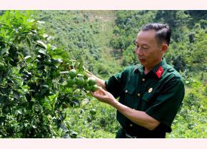 Ông Phạm Việt Hùng bên vườn chanh tứ thời.