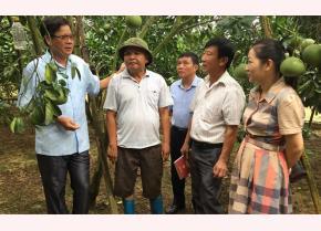 Lãnh đạo Ban Dân vận Thị ủy Nghĩa Lộ thăm mô hình trồng bưởi Diễn của ông Đặng Văn Chung, thôn Bản Chanh, xã Phù Nham.