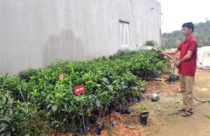 Anh Nguyễn Trường Giang chăm sóc vườn ươm giống cây ăn quả.