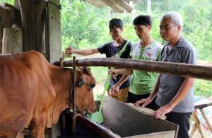 Ông Lạc Quang Mây - Bí thư Chi bộ thôn Chanh Yên tham quan một mô hình kinh tế của thanh niên trong thôn.