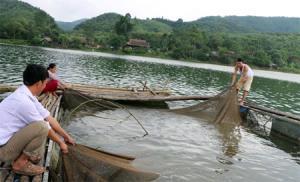 Nuôi cá lồng trên hồ đang mang lại thu nhập cao cho người dân thôn Làng Ven.