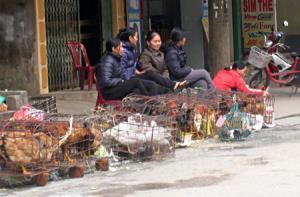 Thịt gia cầm là một trong những nguồn thực phẩm được người dân sử dụng thường xuyên.