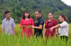 Trao đổi kỹ thuật canh tác lúa ở thôn Làng Đình.