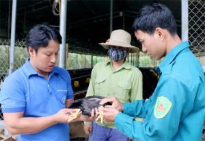 Anh Nguyễn Tiến Sơn (bên trái) giới thiệu giống gà Minh Dư.