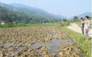 Ruộng của chị Nguyễn Thị Vẽ đang được ngâm nước để chuẩn bị cấy lúa đông xuân.