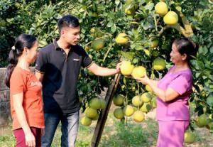 Với nguồn thu ổn định, gia đình chị Đỗ Thị Lý, xã Bạch Hà có điều kiện đóng góp, nâng cao chất lượng các tiêu chí trong xây dựng nông thôn mới.