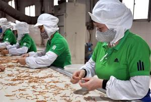 Lao động Công ty cổ phần Yên Thành trong dây chuyền sản xuất măng xuất khẩu.