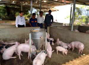 Lãnh đạo xã Châu Quế Hạ thăm mô hình chăn nuôi lợn của gia đình ông Nguyễn Văn Biết.
