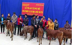 Lãnh đạo Hội CTĐ tỉnh Hà Nam, Hội CTĐ tỉnh Yên Bái trao tặng bò cho các hộ nghèo tại xã An Thịnh.