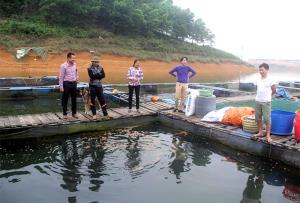 Nuôi cá lồng trên hồ Thác Bà mang lại hiệu quả kinh tế cao.