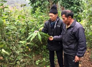 Ông lang Hà Huy Thêm (bên trái), xã Cảm Ân giới thiệu những cây thuốc nam quý được ông đưa về trồng ở vườn nhà.
