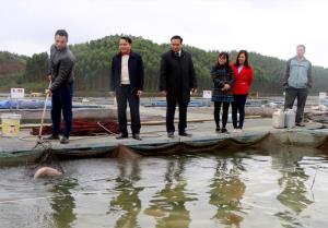 Bí thư Huyện ủy Đoàn Hữu Phung (đứng giữa) thăm mô hình cá lồng của Hợp tác xã Thủy sản Hoàng Kim, xã Hán Đà.