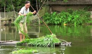 Ông Nguyễn Quốc Huy cho cá ăn.