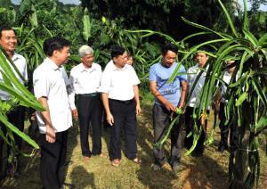 Lãnh đạo Mặt trận Tổ quốc tỉnh thăm mô hình kinh tế của nông dân xã Mông Sơn, huyện Yên Bình.