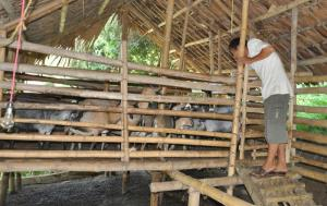 Mô hình nuôi dê trên đảo hồ Thác Bà của ông Lê Văn Đồng, xã Vĩnh Kiên cho thu nhập trên 100 triệu đồng mỗi năm.