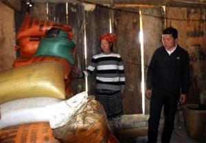 Nhờ khôi phục lại diện tích ruộng bị vùi lấp, gia đình chị Mùa Thị Nu, bản Dào Xa, xã Kim Nọi đã đảm bảo được lương thực.