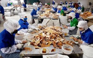 Sản phẩm măng của Công ty cổ phần Yên Thành được xuất khẩu ra thị trường Nhật Bản, Đài Loan.