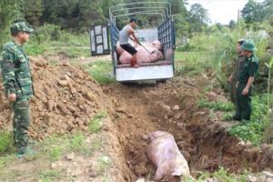 Cơ quan chức năng tiêu hủy lợn sống nhập lậu từ biên giới vào Việt Nam để phòng lây nhiễm dịch bệnh ASF, bảo vệ đàn lợn trong nước.