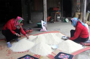 Giống gạo nếp phục tráng cho hạt đều, mẩy và ít bị gãy.