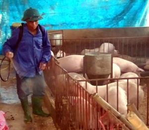 Cán bộ thú ý từ tỉnh đến cơ sở tích cực tham gia phun khử trùng dịch LMLM ở đàn gia súc.