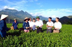 Lãnh đạo huyện Văn Chấn kiểm tra công tác trồng cải tạo chè tại xã Sơn Thịnh.