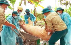 Tiêu huỷ lợn bệnh tại xã Hợp Thanh.
