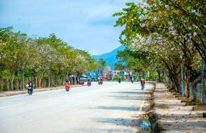 Hoa ban nở đẹp trên các tuyến phố ở TP. Điên Biên. Ảnh: Báo Điện Biên Phủ.