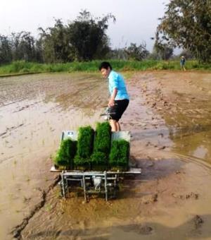 Người dân xã Thượng Bằng La thực hành cấy lúa bằng máy cho vụ xuân năm 2019.