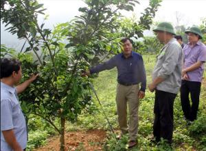 Lãnh đạo Sở Nông nghiệp và Phát triển nông thôn thăm mô hình trồng bưởi Diễn của gia đình ông Đặng Văn Nhậy, xã Bạch Hà.