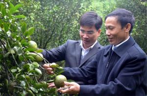 """Cam sành Lục Yên đã được trao chứng nhận nhãn hiệu tập thể """"Cam Lục Yên""""."""