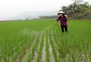 Nông dân xã An Thịnh, huyện Văn Yên phun thuốc phòng trừ sâu bệnh hại lúa xuân.