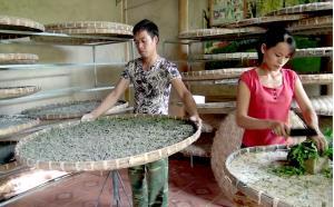 Gia đình chị Nguyễn Thị Yên - thôn Bồ xã Chấn Thịnh chăm sóc lứa tằm mới.