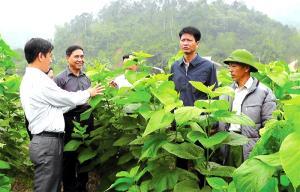 Đồng chí Nguyễn Thế Phước - Bí thư Huyện ủy Trấn Yên (thứ 2 từ phải sang) thăm cánh đồng dâu tằm tại xã Hồng Ca.